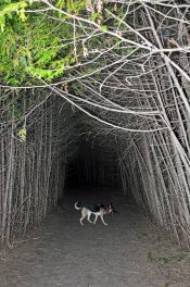 Tree tunnel 1