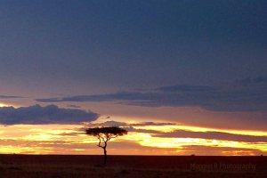 Tree in Kenya